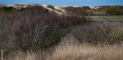 Langeoog im Frühling - Inselimpressionen-8756 (clickraa) Tags: langeoog insel impressionen