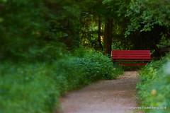 Parkbank in rot (grafenhans) Tags: sony alpha 68 alpha68 a68 ilce parkbank tamron 2870200 rot weg waldweg grafenwald bottrop nrw