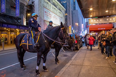 Horsing around in Times Square (Photos By RM) Tags: horse timessquare manhattan newyork newyorkcity nyc nycphotographer street horses lights midtown animals