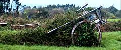 old cart / carro viejo (Roger S 09) Tags: asturias villaviciosa oles sanfelixdeoles carro cart carroviejo oldcart abandono
