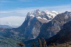 Wetterhorn a bit closer (Hans van Bockel) Tags: hansvanbockel d7200 nikon sigriswil zwitserland ch grindelwald wetterhorn berg bergen alpen alps mountains swiss switzerland kleinescheidegg fallboden