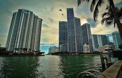 Saying goodbye to the afternoon. (Aglez the city guy ☺) Tags: afternoon downtownmiami downtown city colors cityscapes waterways walking walkingaround river island brickellkey urbanexploration urban coconuttree lateafternoon outdoors building