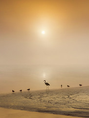 The Short and the Tall (adrians_art) Tags: greyherons blackheadedgulls silhouettes birds riverthames water reflections shadows sky clouds weather fog mist sunrise dawn wildlife nature gold yellow orange red black white uk england