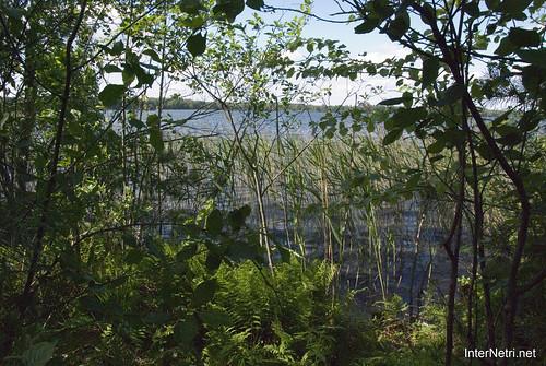 Шацький Національний Природний Парк Озеро Пісочне Берег InterNetri  Ukraine 166