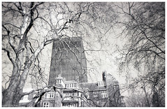 Trees + Towers (peterphotographic) Tags: img001edwm treestowers disposable disposablecamera xp2 scanned ©peterhall euston london england uk britain city cityscape urban film 35mm analog blackandwhite blackwhitephotos bw monochrome tree tower modernarchitecture towerblock