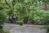 Ψίνθος (Psinthos.Net) Tags: μετάτηβροχή μετάτηνβροχή afterrain aftertherain rainingmorning rainin βροχερήμέρα βροχερόπρωί πρωί mor πρωίάνοιξησ ανοιξιάτικοπρωί άνοιξη spring may μάιοσ μάησ φύση nature βρύση βρύσηψίνθου βρύσηψίνθοσ περιοχήβρύση vrisi vrisiarea vrisipsinthos road δρόμοσ βρεγμένοσδρόμοσ wet πεζοδρόμιο pavement sidewalk φύλλα leaves πλάτανοσ planetree tree δέντρο κλαδιάδέντρων treebranches πλατάνοι πλάτανοι πλατάνια planetrees valley psinthosvalley κοιλάδα κοιλάδαψίνθου κοιλάδαψίνθοσ ακακία acacia purpleblossoms μώβάνθη άνθη blossoms treetrunk κορμόσδέντρου δέντρα trees κορμοίδέντρων treetrunks μπουκαμβίλια bougainvillea