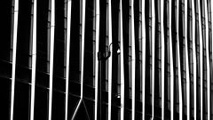 Hiding In Plain Sight (Sean Batten) Tags: london england unitedkingdom gb europe blackandwhite bw architecture lines securitycamera city urban victoria nova nikon d800 58mm cctv monitoring