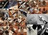 Saturn V (olliethewino) Tags: lego legoideas legosaturnv saturnv apollo nasa rocket sic sii sivb lunarmodule commandmodule servicemodule model toy collage