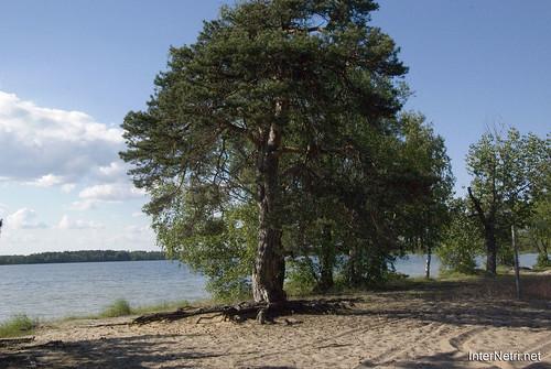 Шацький Національний Природний Парк Озеро Пісочне Сосни InterNetri  Ukraine 365
