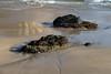 Juegos de playa IMG_6378 (fernandodelatorre46) Tags: méxico mexico guerrero ixtapa mexicanbeaches costagrande