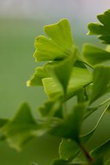 Grün für die Ewigkeit