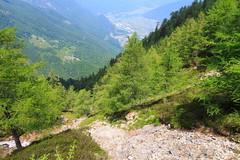 Gande in Val Milano (Roveclimb) Tags: montagna mountain alps alpi muncech escursionismo hiking trekking casenda paiedo berlinghera zania forcelladellazania valmilano altolario valchiavenna sorico forest foresta wood bosco nature natura