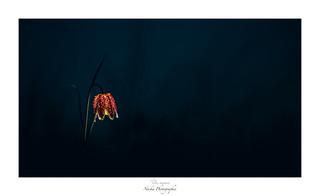 Wild Lantern