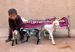 Littles (Amna Yaseen) Tags: cholistan goats pakistan kid child 2018 travel femalephotographer