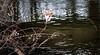 20180330-043 (sulamith.sallmann) Tags: gewässer clothes fluss garbage kleidung müll prims river unterwäsche wasser waters sulamithsallmann