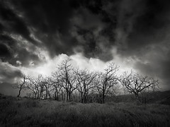 Copse at Spanish Town (StefanB) Tags: usa 2018 918mm almadenquicksilver california clouds em5 geotag hiking mood outdoor tree treescape