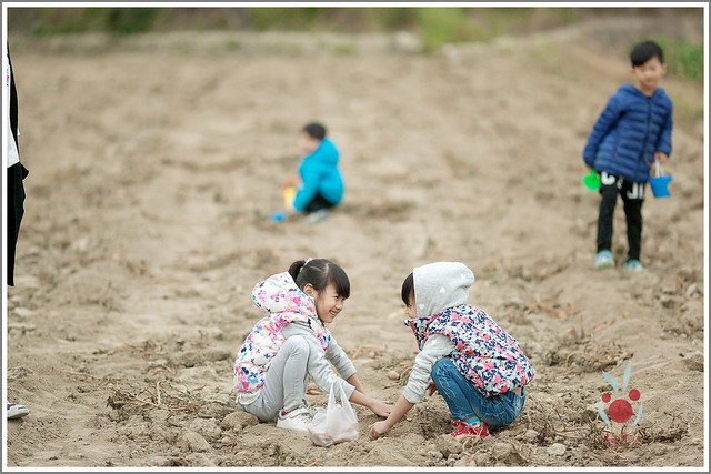 火龍果園星光野餐Ⅱ 找地瓜 烤地瓜 吃地瓜 (12)