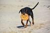 20180408 MARKGRAFENHEIDE (70).jpg (Marco Förster) Tags: dobermann hunde natur markgrafenheide ostsee strand frühling