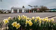 Alderson Gulf with Daffodils (Bob G. Bell) Tags: alderson wv gulf servicestation visitorscenter gasstation westvirginia greenbrierriver flowers daffodils