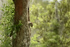 Squirrel! (dtredinnick13) Tags: squirrel baratariaswamp baratariapreserve nps nationalparkservice nationalparksandmonuments swamp wetlands louisiana wildlife nature naturephotography bayou nikon nikond850 nikon28300