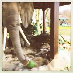 Zoo- und Freizeitpark Jaderberg (jphintze) Tags: jaderparc wesermarsch zoo freizeitpark jade tiere menschen deutschland