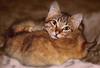 Sleepy cats (kvl23) Tags: cat domestic pet sleep fur furry downy kitten carnivore sleepy adorable animaleye domesticcat eyes animalhead