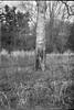 tree trunk, field, grasses, Biltmore Estate, Ashevile, North Carolina, Afga Chief, Kodak TMAX 400, Ilford Ilfosol 3 developer, 4.14.18 (steve aimone) Tags: treetrunk grasses field biltmoreestate asheville north carolina afga afgachief kodaktmax400 620 620film mediumformat monochrome monochromatic blackandwhite landscape