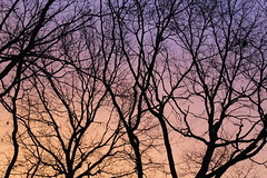 Sunrise 6:30 AM EST (Tyler Ruggiero) Tags: sky sunrise sunset spring orange yellow blue dope