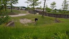 20180523_130915 (TheSlayerNL) Tags: wildlands emmen zoo dieren animals adventure wildlandsadventurezoo
