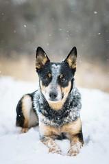 Snowing <3 (Emese Ruzsa) Tags: