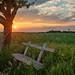 Dorfidylle (matthias_oberlausitz) Tags: gröditz weicha weisenberg sonnenuntergang sunset bank kirschbaum oberlausitz sachsen