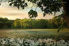 Sun Begins To Set on Lily Lake (socalgal_64) Tags: carolynlandi sunset lake pond lilies water trees treeline landscape scenic saylorsburgpa pennsylvania hamiltontownship nature reflections plants pads leaves sky clouds