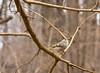 small birds (brendacyr) Tags: nature ojibwayprariecomplex smallbirds spring