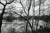 DSC_00351 (grebe.j) Tags: wasser holz weiher baum bäume himmel black blackandwhite white