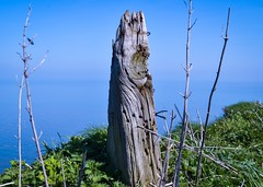Fence post on the edge (rustyruth1959) Tags: blue bug wire rust sky coast sea oldfence grass wood rotten woodenpost post fence fencepost cliffs bempton bemptoncliffs yorkshire england uk tamron16300mm nikond5600 nikon knot rot decay outdoor horizon greenery