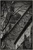 Göttingen - St. Albani (dietmar-schwanitz) Tags: göttingen niedersachsen lowersaxony germany deutschland stalbani stalbanikirche stalbanschurch kirche church sakralbau sakralarchitektur architektur architecture baustil gotik gothic gebäude building bauwerk sehenswürdigkeit sight mittelalter middleages schwarzweis blackwhite bw sw monochrom monochrome mono sepia tönung nikond750 nikonafsnikkor24120mmf40ged lightroom nikcollection silverefex dietmarschwanitz