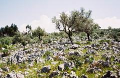 """Campo de Lapiás"" (rgrant_97) Tags: portugal rabaçal serra hiking caminhadas film olympus trip olympustrip35 fuji grain"