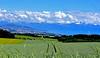 Pas loin... Lausanne... (Diegojack) Tags: d7200 vaud suisse saint saphorinmorges paysages campagne perspective blés verts montagnes lausanne groupenuagesetciel