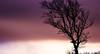 Red, red Wine (Beppe Rijs) Tags: deutschland germany schleswigholstein schlei wolken wolkendecke frühling spring landschaft landscape natur nature field feld gras baum tree horizont horizon grün green clouds farbig colored line linie rural ländlich pastell color farbe sundown