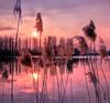 Real Thoughts (Robyn Hooz) Tags: rubano papiri papyrus reflection laghetto parco etnografico surface superficie rosa sunset tramonto padova ilvivipadova padovainfoto