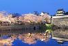 Fukuoka Castle Sakura Festival 2018 (tomosang R32m) Tags: japan fukuoka sakura cherryblossoms maizuru castle park ruin night flowers 福岡 桜 夜桜 夜景 舞鶴公園 福岡城址 sakurafestival 福岡城さくらまつり festival yakei lightup bluemoment