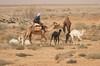 Camels near Azraq (Wild Chroma) Tags: desert azraq camels jordan