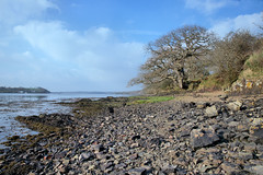 Clear day (againandagain251) Tags: cleddauriver cleddauestuary estuary tree hightide calm water rocks pembrokeshire wales
