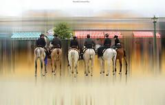 Seis caballos y caballistas - Six horses and raiders (ricardocarmonafdez) Tags: andalucía sevilla ciudad city urbanscape streetphotography holidays fair aprilfair feriadeabril caballos caballistas horses jinetes raiders color edition edicion effect 60d 1785isusm canon ricardocarmonafdez
