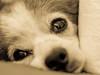 Acurrucada (risaclics) Tags: make me smile 50mm18macro 7dw march2018 nikond610 risadogs animlas mascotas monochrome perros makemesmile
