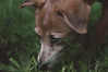(Rodrigocolagrossi) Tags: dog perro nikon d300 50mm f18 18 nikkor nature natural retrato portrait cinematic cine