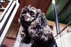 MGoodrich_20180324_H15M28S56.jpg (guudrich) Tags: dog oliver porch baltimore maryland backyard hampden unitedstates us