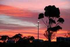 Dawn (Karen Pincott) Tags: sunrise silhouettes newzealand napier napierbeachkiwiholidayparkmotels hawkesbay autumn easter holidays camping