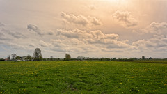The Dandalionfield (Alfred Grupstra) Tags: nature meadow grass ruralscene outdoors summer cloudsky field sky landscape agriculture scenics tree farm season blue greencolor land beautyinnature springtime dandalion