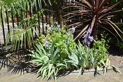 DSC_2058 John Wesley's Chapel City Road London Purple Flowers (photographer695) Tags: john wesley's chapel city road london purple flowers
